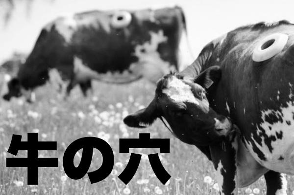 牛の穴・rumen fistula(ルーメン フィステル)